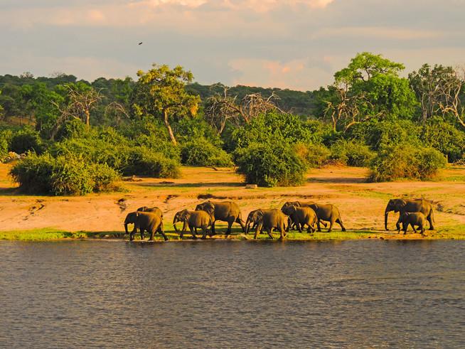 Botswana - die Perle im südlichen Afrika