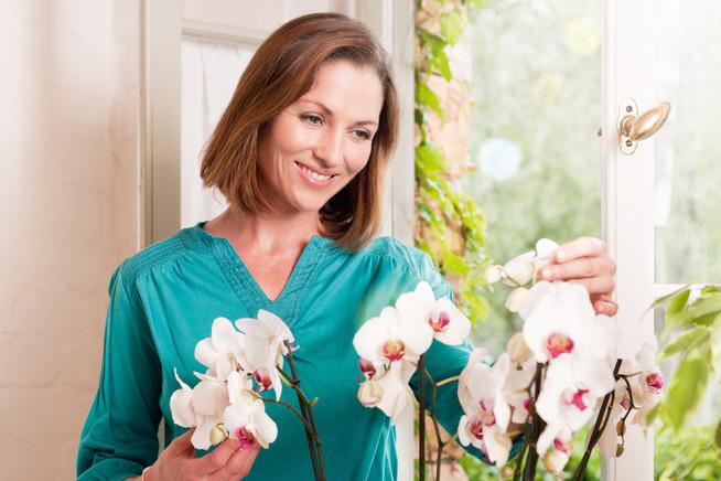 Orchideen sind die beliebtesten Zimmerpflanzen in Deutschland