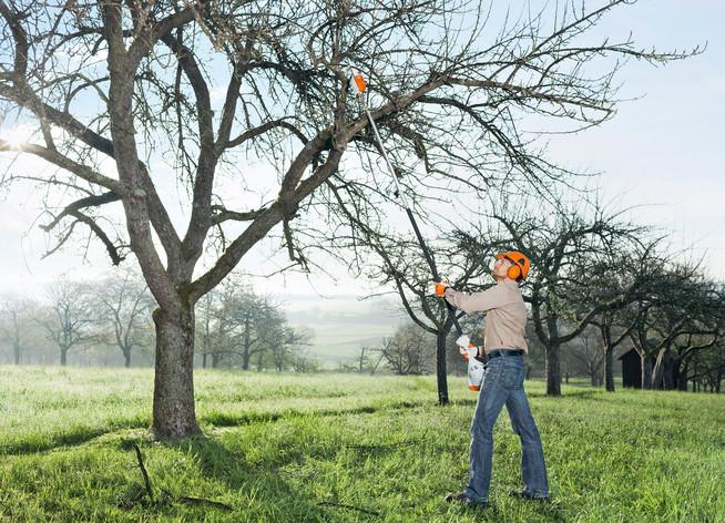 Der Winter ist die beste Zeit zur Pflege der heimischen Obstbäume