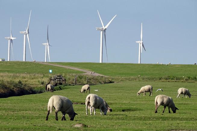 Erneuerbare Energien: Investments in konkrete Projekte treiben den Wande