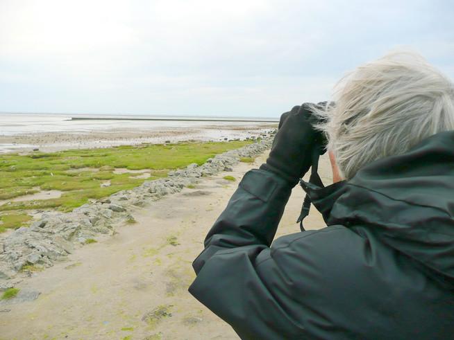 Die Nordseeküste lockt mit einer einzigartigen Tierwelt und tollen Foto
