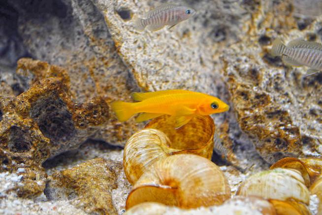 Aquarien haben sich seit ihren Ursprüngen technisch raffiniert weiteren