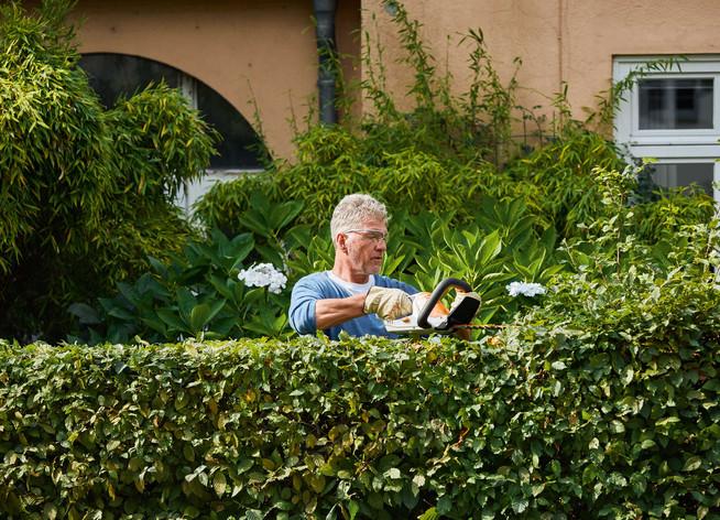 Fünf Tipps für den richtigen Schnitt des grünen Zauns