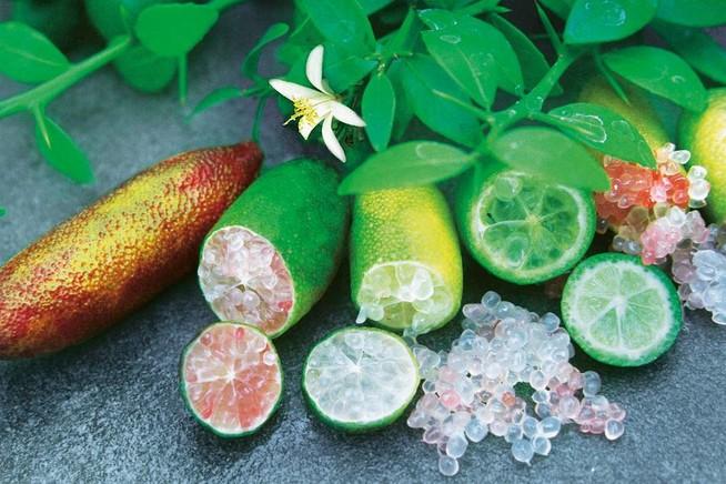 Die Caviar-Limette wächst pflegeleicht auf Balkon, Terrasse und im Gart